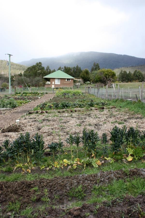 The Agrarian Kitchen Garden