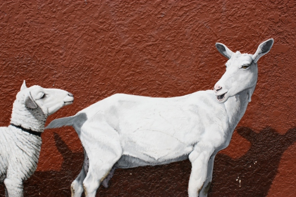 Tassie sheep mural
